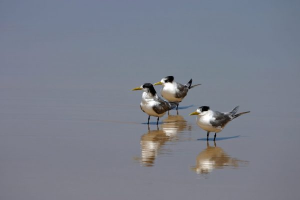 bird watching at fraser island seashore